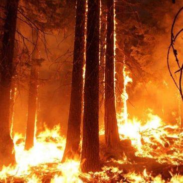 Hohe Waldbrandgefahr in weiten Teilen Hessens – Zweithöchste Alarmstufe