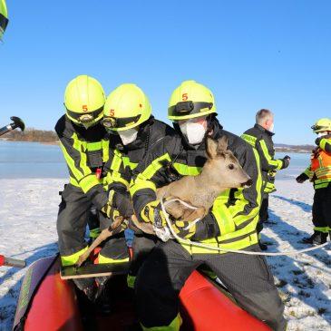 Tierrettung auf dem gefrorenen Hochwasser