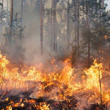 Alarmstufe A (hohe Waldbrandgefahr) ausgerufen