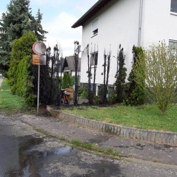 Heckenbrand in Lindheim